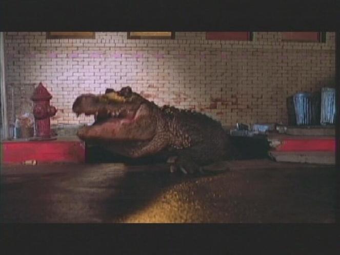 alligator1-1